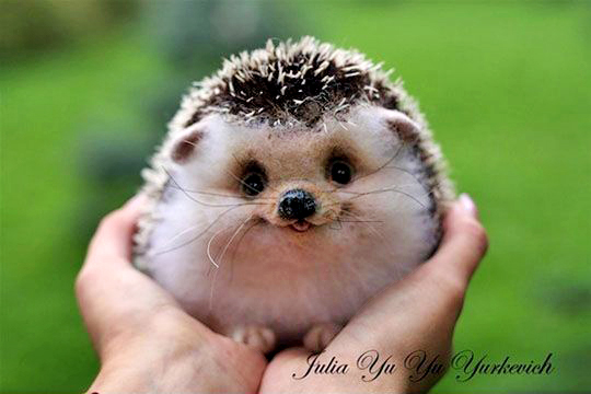 hedgehog-smiling
