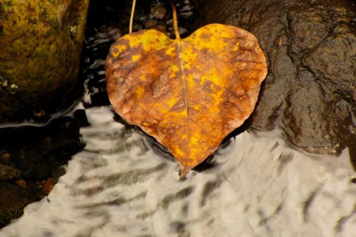 path10_heart