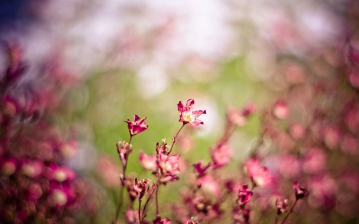 Grass-Flowers-Plants-Blurred