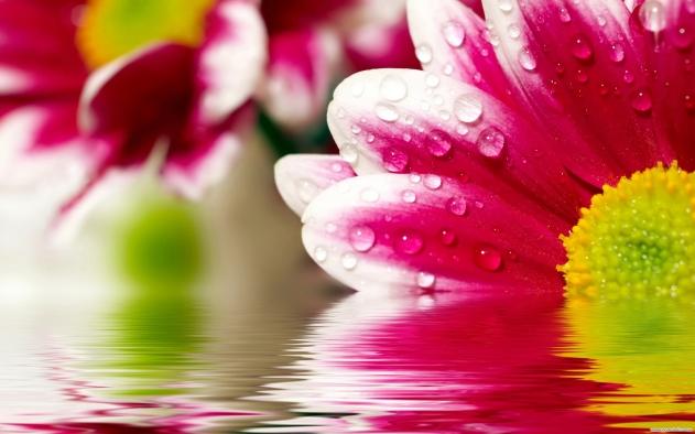 odraz-flower