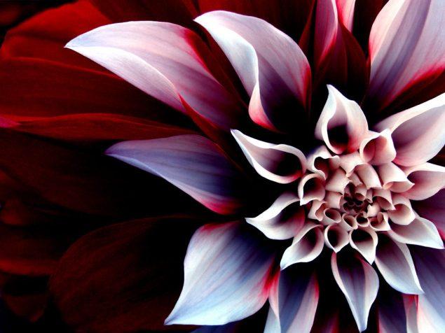 Flower-poem