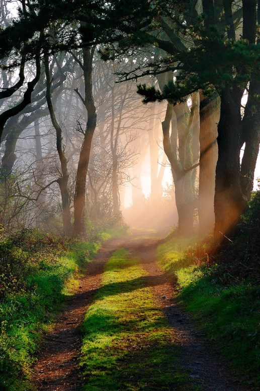 path-light