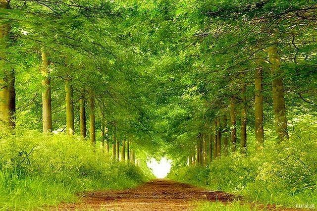 path-heart